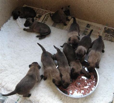 what to feed puppies at 3 weeks s puppies to 3 weeks