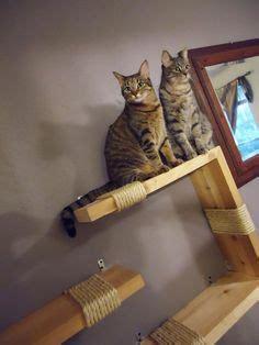 images  cat shelves condos trees perches