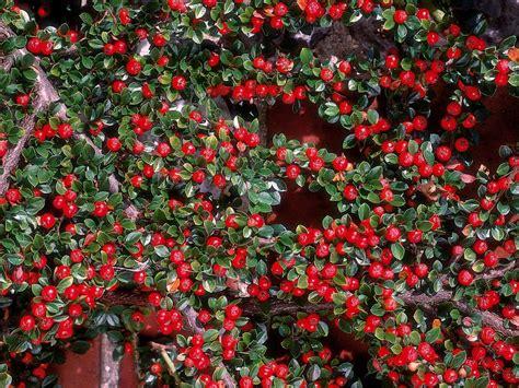 winter bloemen australie flowers that bloom in winter gardening pinterest