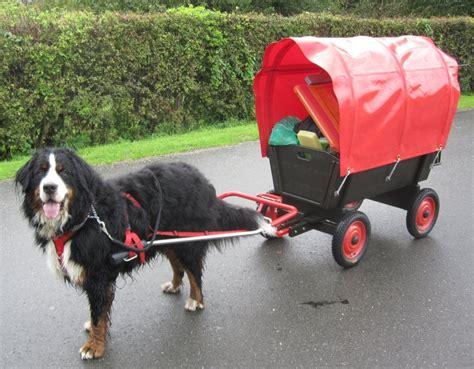 bollerwagen f r 2 kinder 1576 bollerwagen f 252 r hund gesucht