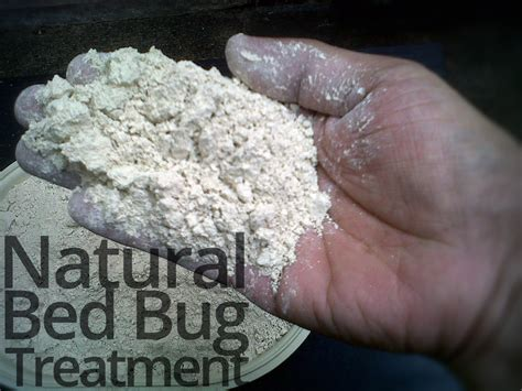 natural bed bug treatment natural bed bug treatment for lasting bed bug relief memes