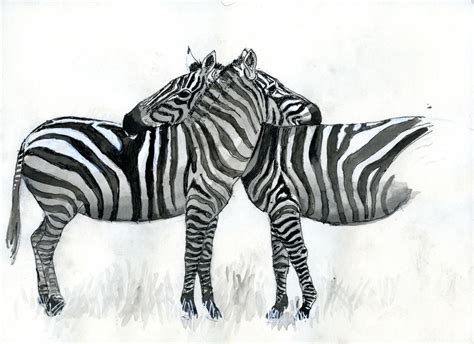 Drawing Zebra Stripes by Wildlife Biologist Earns His Zebra Stripes With New Book