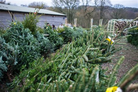 keele christmas tree farm kjohnnyw photography blog