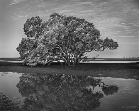 black and white ben messina landscape and nature photography