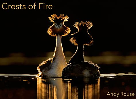Photographers Best by Top Bird Photographers In The World