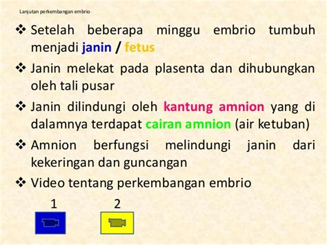 Janin 35 Minggu 9 2 Sistem Reproduksi