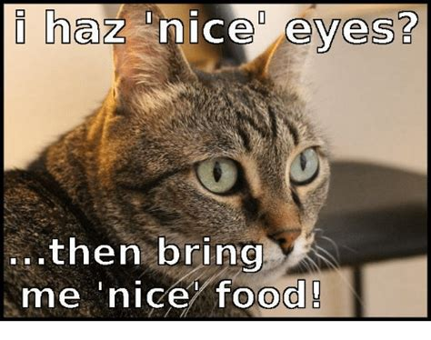 Bring Me Food Meme - i haz nice eyes then bring me nice food food meme on