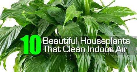 best houseplants for clean air nasa clean air houseplants page 3 pics about space