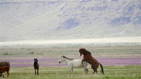 lets get off our high horses full time travel isnt the slow motion wild horses mating in the west desert in utah