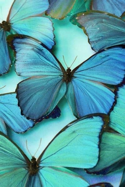 beautiful blue color color turquoise aqua mariposas color aqua teal