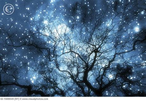 tree silhouette against starry night sky harmonia confessions of a teenage drama king february 2012