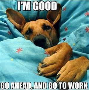 Comfy Dog Beds Dog In Your Bed Funny Pictures Dump A Day