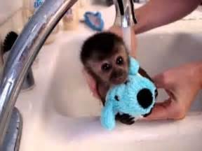 baby monkey nala gets a bath