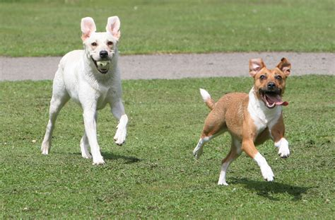 how fast do dogs run dogs running www pixshark images galleries with a bite