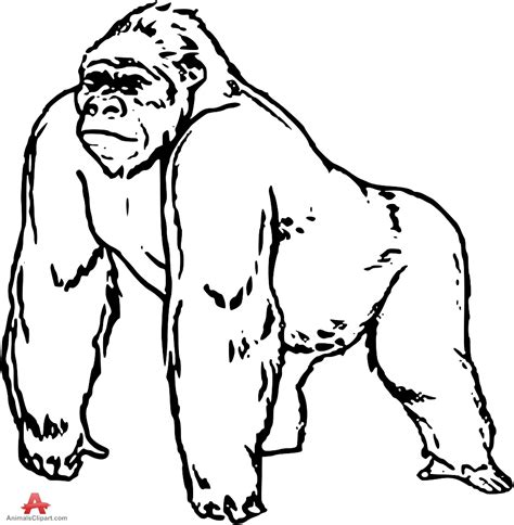 gorilla outline coloring page top 94 gorilla clipart free clipart image