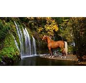 Palomino Horse Wallpapers  Awesome