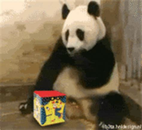sneezing baby panda image gallery know your meme