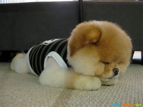 puffball puppy puff name cuteimages net
