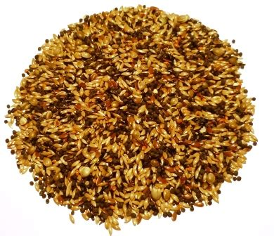 wild bird food food for wild birds bird seed sunflowers