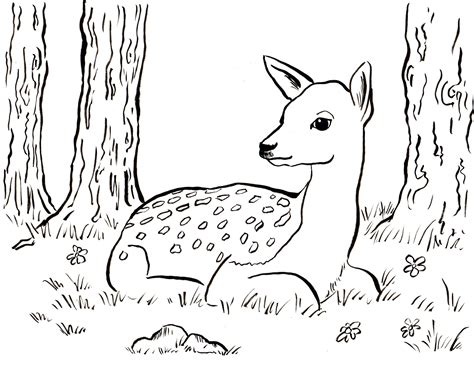 fawn step by step coloring pages