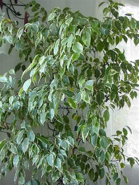 piante da appartamento come curarle come curare le piante da appartamento in inverno