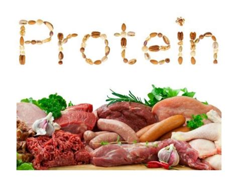 5 proteins in our proteins