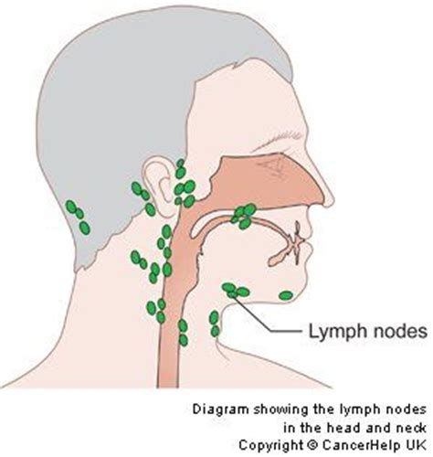 glands in the neck and throat diagram diagram showing the lymph nodes in the and neck my