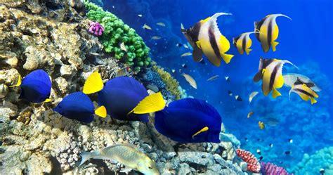 reef wallpaper nature hd desktop wallpapers 4k hd fish under water 4k ultra hd wallpaper ololoshka