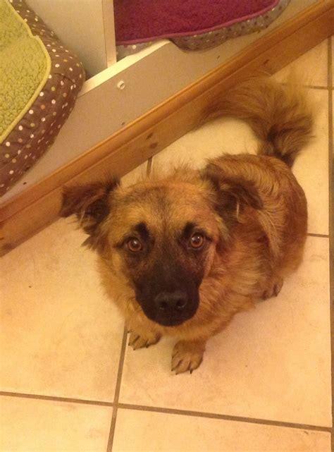 small breed rescue small rescue swadlincote derbyshire pets4homes