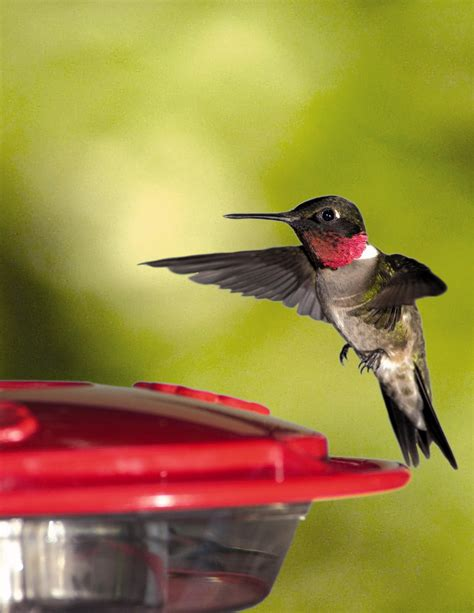 Backyard Birds Omaha by Fascinating Hummingbirds Birds Unlimited Omaha Ne
