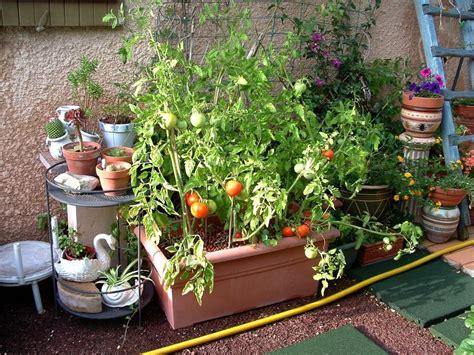 Planter Tomates En Pot by Cultivons Des Tomates En Pots Jo Tourtit