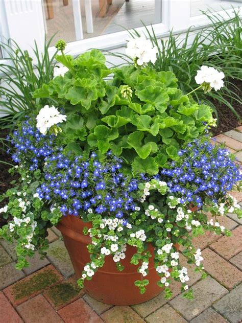 Plant Combination Ideas For Container Gardens Creative Garden Container Pot Combinations And Tips
