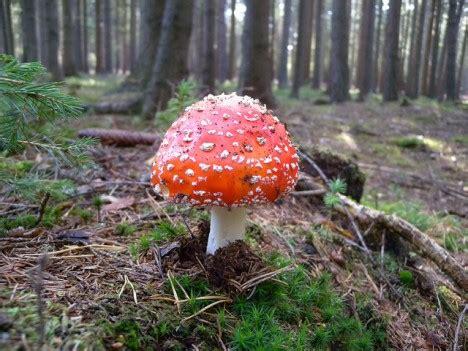 Psychoaktive Pilze Im Garten by Hexenkr 228 Uter Und Zauberpflanzen