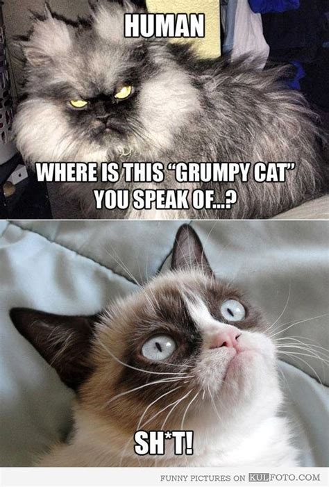 grumpy cat scary cat colonel meow