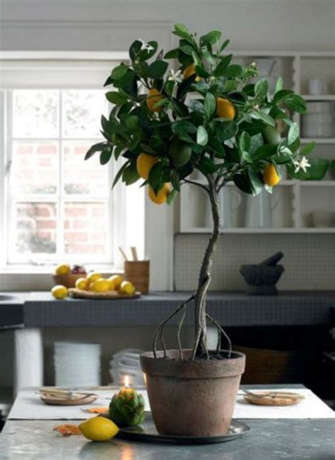 indoor tree planter 1000 ideas about indoor plant decor on plant