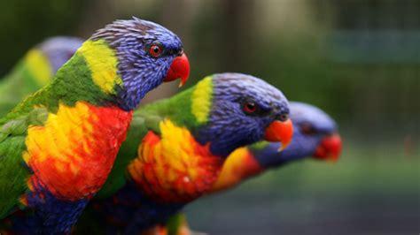 colorful parrot wallpaper colorful parrots hd wallpapers