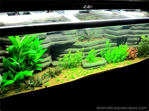 design your own aquarium background get inspired with these 9 diy aquarium backgrounds tfcg
