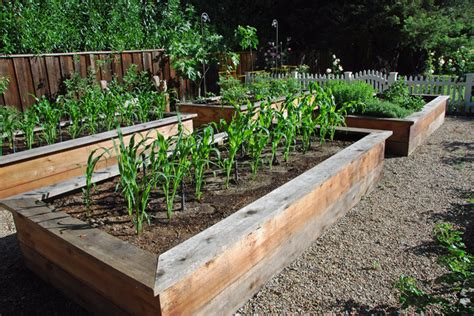 raised planter boxes Landscape Traditional with box corn