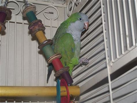 r3 feathered friends parrot rescue of michigan