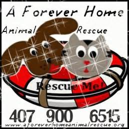 a forever home animal rescue pet services 3501 w vine
