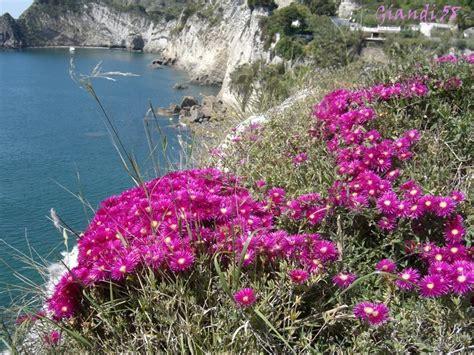 i fiori mare fiori sul mare foto immagini piante fiori e funghi