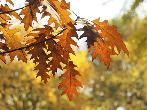 Dead Of Autumn free images branch sunlight fall season maple tree