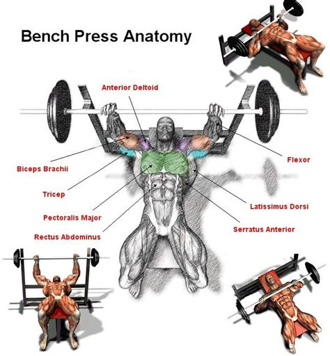 bench press for mass gain chest mass and boost your bench press gymguider com