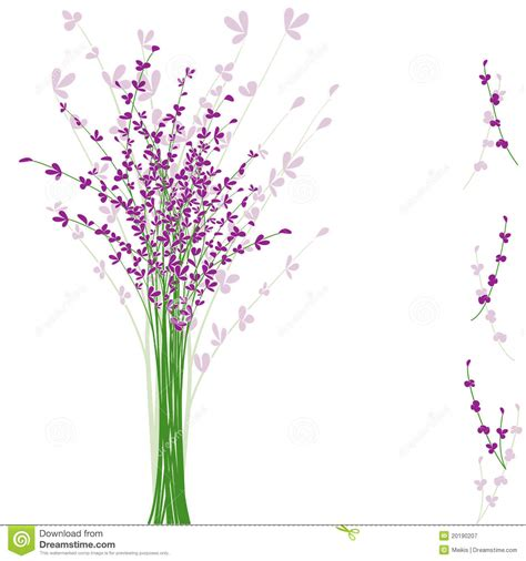 summertime purple lavender flower stock vector image