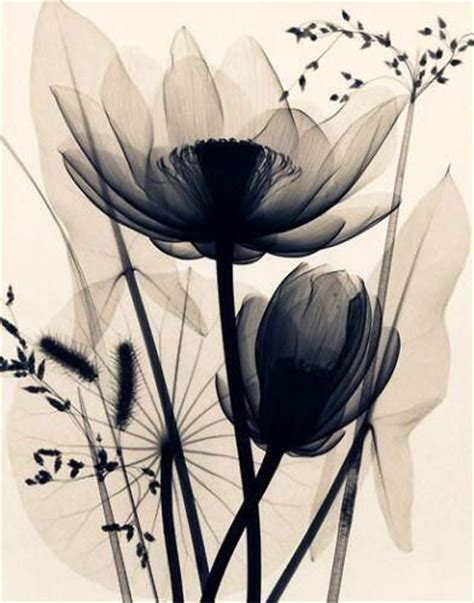 pin xray flower photos pictures images on pinterest