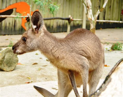 animals  love  singapore zoo