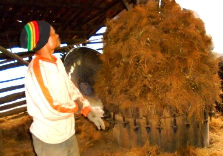 Minyak Usar lima kilogram minyak akar wangi produk dua ton usar