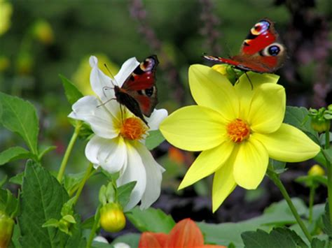 butterfly garden ideas butterfly garden ideas howstuffworks