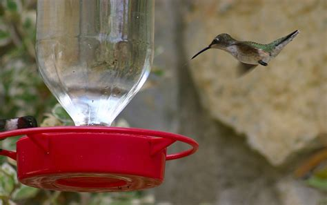 hang your hummingbird feeders they are coming back soon