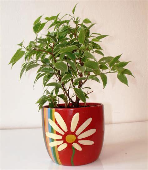 ficus planta interior ponga plantas descontaminantes en su casa excelsium